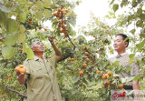 徐州铜山区大彭镇开展帮扶行动,力促富民增收