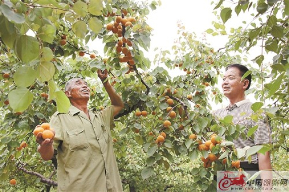 徐州銅山區大彭鎮開展幫扶行動,力促富民增收