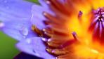 禅意摄影:莲花内的千手观音