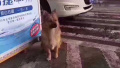杭州一宠物狗被马大哈主人遗忘在加油站 汪星人连等两天