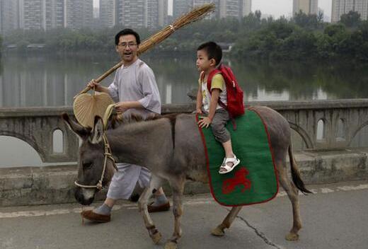 孩子騎牛上幼兒園