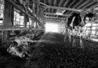 动物尸体遍地:禁令发布前冒死拍摄的日本福岛辐射区