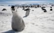 """我国即将开展第八次北极科考 """"雪龙""""号将首次试航西北航道"""