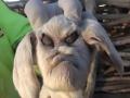 山羊死胎长暴怒人脸