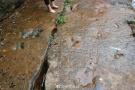 一亿年前恐龙足迹