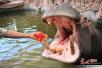 高温下的野生动物 吃西瓜泡水池享空调