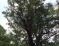 杭州最老的树在哪?西湖边1400多年的银杏你见过吗?