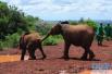 追踪:泰国大象踩人事件 警方称游客拍照刺激大象