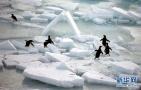 南极可爱的生灵