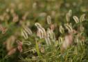 白露到五大疾病也随之而来 秋季如何养生?