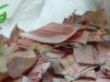 咋回事?她将一大摞百元钞票撕碎后扔进垃圾箱