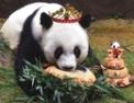 熊猫看起来是棕色的
