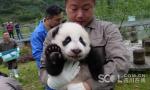 2017级大熊猫宝宝