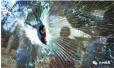"""台州两""""熊孩子""""扔石子砸破奔驰车玻璃,家长拒赔闹上法庭"""