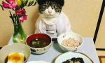 喵星人化身日式主厨
