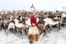 """""""冰上丝路""""的驯鹿牧民"""