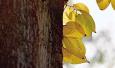 一树秋叶尽飘零 郑州人民公园偶遇几枚秋叶