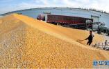 玉米价格连续上涨 价格会进一步攀升吗?