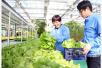 山东无棣:现代农业结硕果