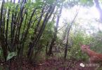 安吉龙王山孤独护林员:日行30里,抓过盗猎者多次救过驴友