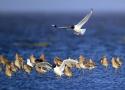 江苏观鸟季来了!每年沿海湿地过境中转和越冬的水鸟逾300万只