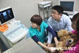 南京现新型宠物医院:狗狗可做核磁还能血透