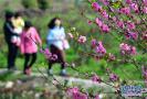 潍坊即将进入最美赏花季 这份赏花攻略请收好
