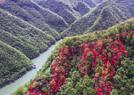 山野开遍映山红