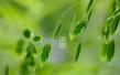 今日谷雨:雨生百谷夏将至 来看看谷雨的哪些传说