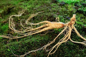 230年前一艘船来中国狂卷20亿离开 一种稀缺植物被盗挖