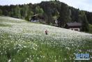 瑞士盛开五月之雪