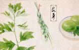 连粽叶是什么都不知道,对得起刚吃进肚的粽子吗?