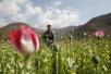 全球可卡因和鸦片产量创纪录 阿富汗产量占绝大部分