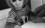 猕猴贩卖产业链:转手几次卖上万元 有人买来当宠物