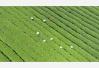 【茗边聚焦】四轮驱动下的湖南千亿茶产业系列报道(十八):千秋界庄园:茶在路上