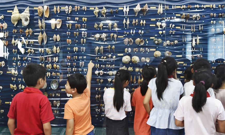 校园博物馆:中国湿地博物馆贝壳专题馆在杭州某小学开放