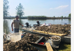 洪泽湖鱼蟹死亡的污染原因找到了!都是上游惹的祸