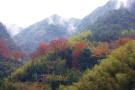 和单调的马尾松林说再见 杭州午潮山要变油画