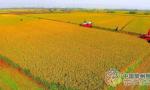 常州将迎丰收年:水稻增产明显出米率高