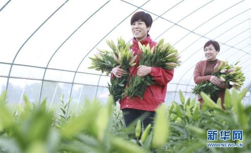 河北南和:花卉种植助农增收