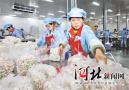 临西县:科学布局现代农业 致富产业快速兴起