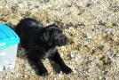带狗狗去海边玩 多准备饮用水防止狗狗喝海水
