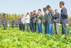 今年河北4市将实施10万亩旱作雨养种植试点项目