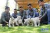 济南野生动物世界雪虎五胞胎迎客:虎名来自五岳名山