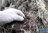 《中国生物多样性红色名录》发布:冬虫夏草和猴头菇已属易危