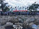 中国海龟保护联盟在海南三亚成立