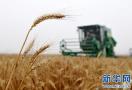 农发行山东省分行筹措资金300亿元支持夏粮收购