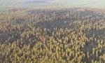 内蒙古大兴安岭汗马保护区火场外线明火全部扑灭