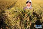 中国农民丰收节是否放假高速免费吗?答案在这里