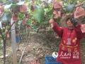 江苏海门:高效农业种出富民路 农民一年多挣四五万